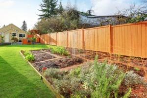 home vegetable fruit garden